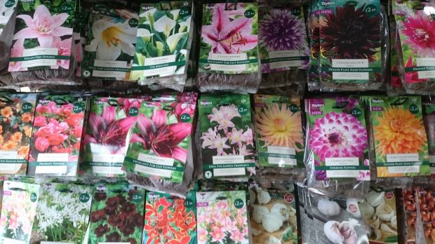 Summer Bulbs now In...