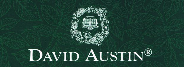 New DAVID AUSTIN English rose selection now in!